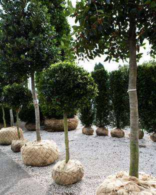 Instant Hedging and Screening
